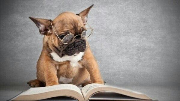 Perros intelectuales leyendo con gafas