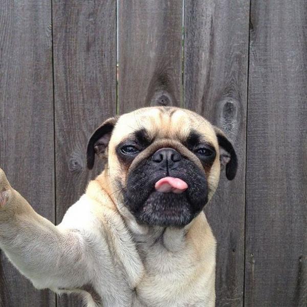 Selfies de perros para el celular