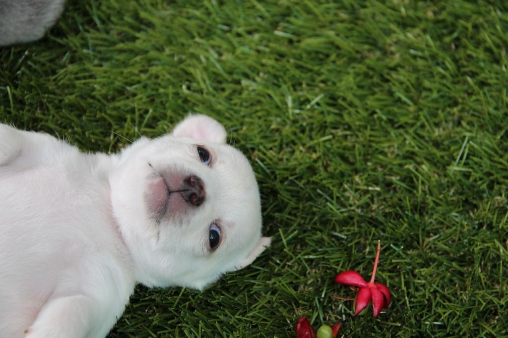 Tierna selfie de un perrito