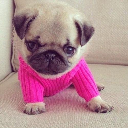 Tiernas imagenes de perros vestidos