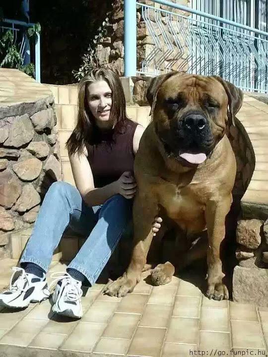 foto con mi perro de gran tamaño