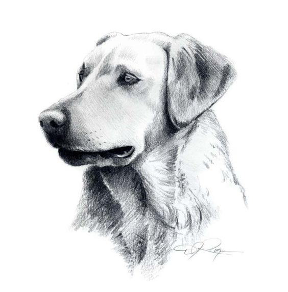 fotos de dibujos de perros a lapiz