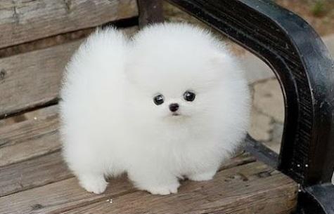 fotos de los perros mas hermosos del mundo y pequeñitos