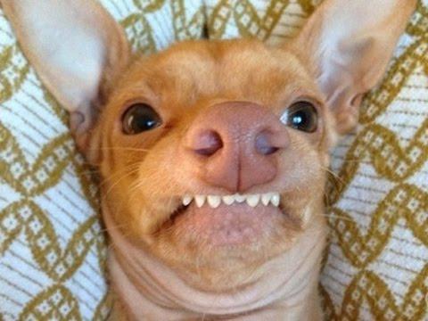 fotos de selfies chistosas de perros