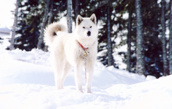 imagenes de perros blancos