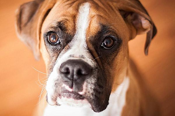 imagenes de perros con cara triste