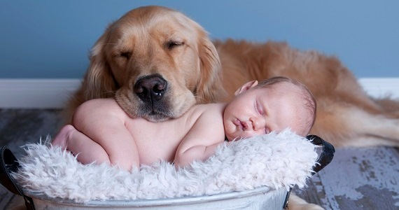 imagenes tiernas de perros durmiendo con bebes