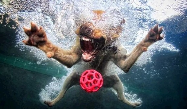 perros atrapando pelotas en el agua