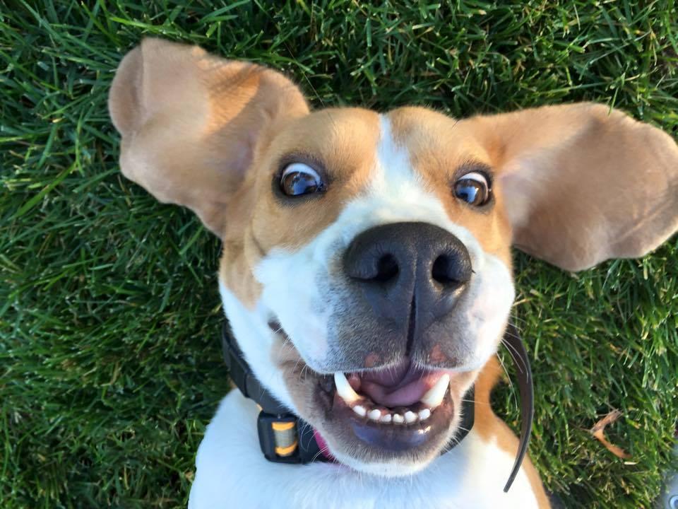 selfie de perro