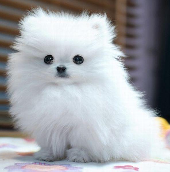 tiernas imagenes de perros pequeñitos