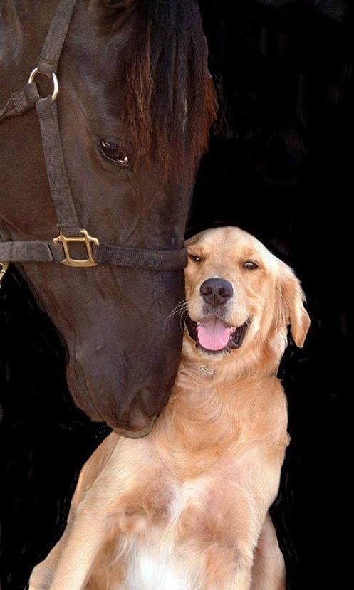 Bonita imagen de fondo de pantalla de un caballo y un perro