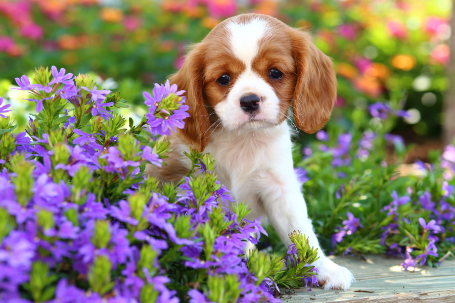 Cachorros en un jardin de flores para whatsapp