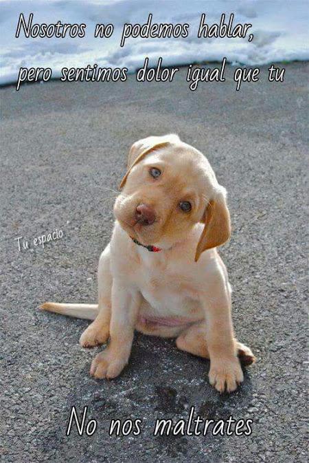 cachorros lindos y tiernos con frases