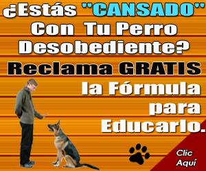 Educar un perro-300x250