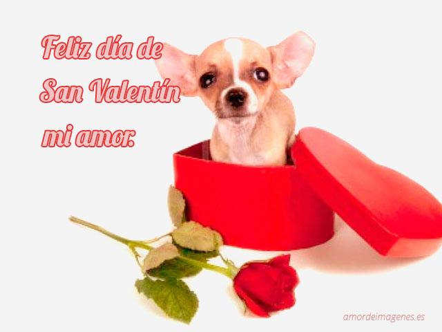 Feliz dia de san valentin mi amor imagen perrito de regalo corazon y rosa
