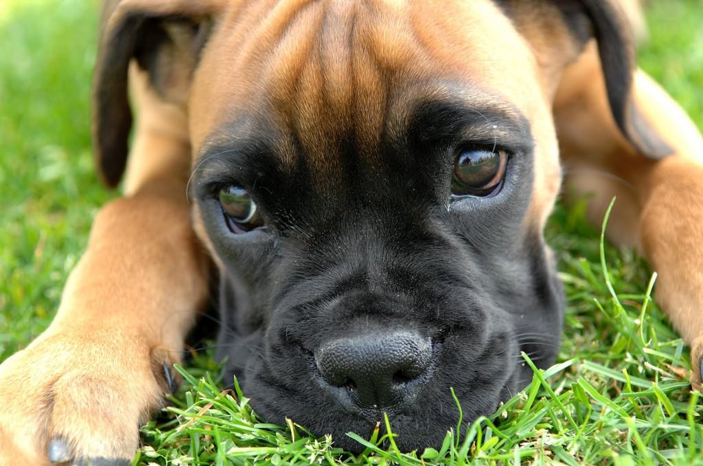 Fondo de pantalla de celular de perros