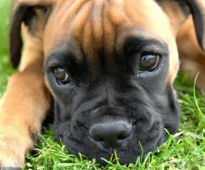 Los Fondos Fe Perros Mas Hermosos Para Celular