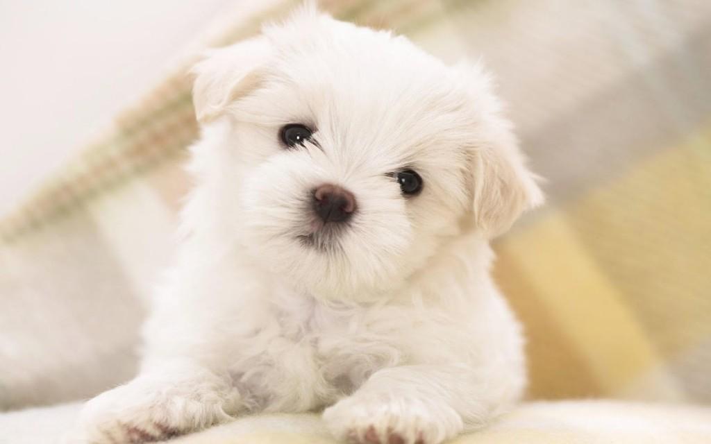 Fotos de perritos pequeños para usar como fondo de pantalla