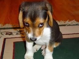 Fotos de perros con las caritas mas tristes