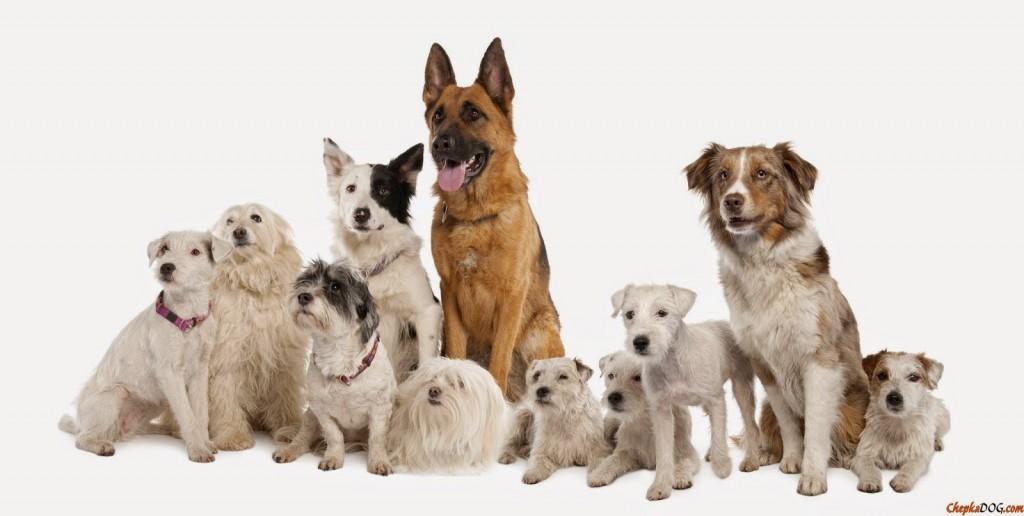 Fotos de perros en grupo