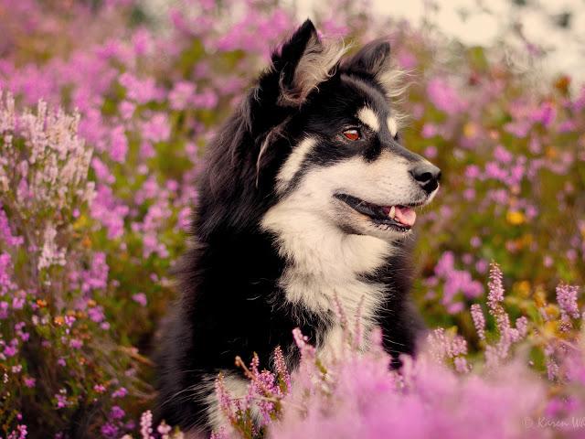 Fotos de perros en un jardin para fondo del celular