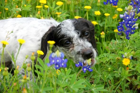 Imagen de perrrito en medio de un jardin de flores