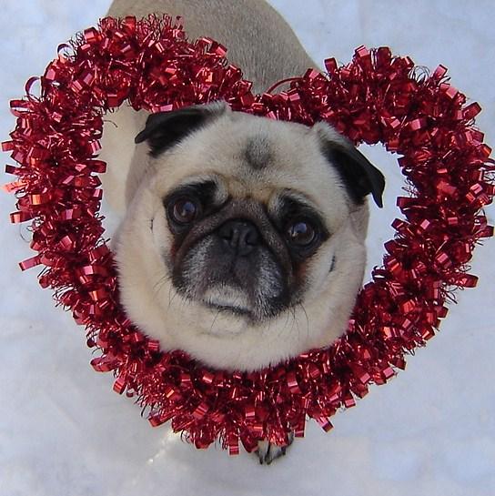 Imagen de un perrito con un corazon