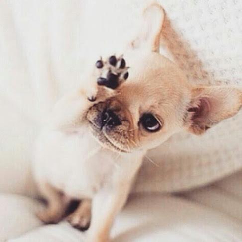 Imagen tierna de un perrito pequeño para el celu