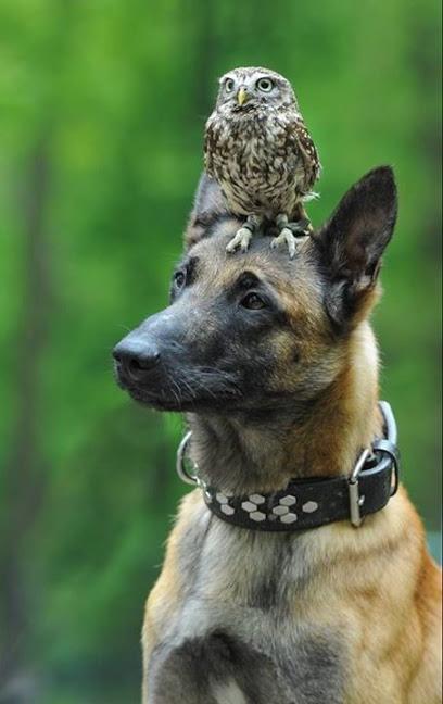 Imagenes Para Fondo De Pantalla De Perros Junto A Otro Animal