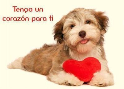 Imagenes de Perros Con Corazones y Mensajes De Amor