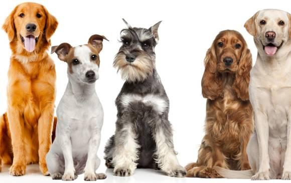 Imagenes de perros de varias razas