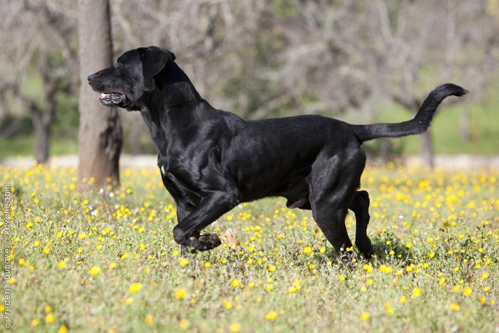 Imagenes de perros negros corriendo en una pradera