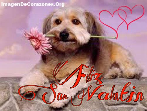 Imagenes de perros y corazones feliz san valentin