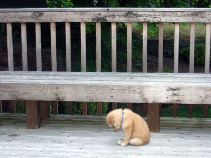 La mas tierna imagen de perrito triste