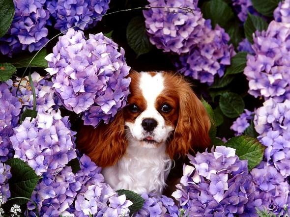 Perrito en un jardin en primavera