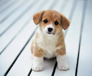 Fondos De Pantalla De Cachorros Tiernos