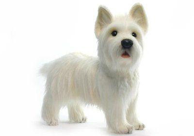 razas de perro pequeño westie