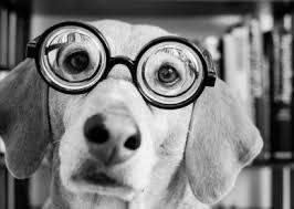Imagen chistosa de un perro con anteojos de aumento