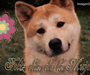 Imagenes Con Perros Feliz Dia De La Mujer