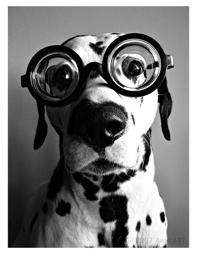Imagenes Graciosas A Blanco Y Negro De Perros Con Gafas De Aumento