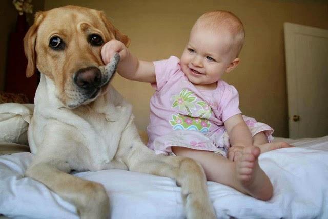 Perros De Raza Mezcladas es el mejor perro para los niños