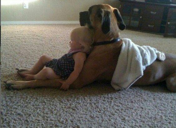 perro de raza mastín adecuado para los niños