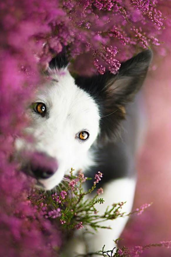 Bonitas imagenes de perros para el celular