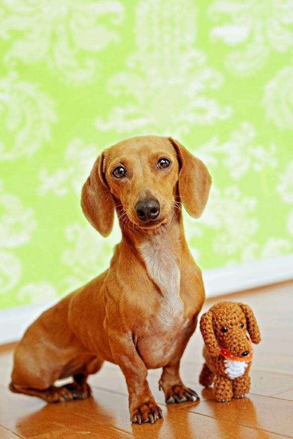 Imagenes lindas de perros para usar como fondo