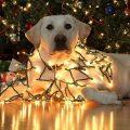 Imagenes De Perritos Enredados En Luces De Navidad