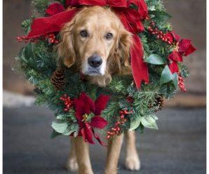 Imagenes Navideñas De Perros Para Fondo De Celular