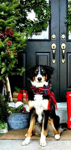 fondos-de-navidad-con-perros-para-iphone