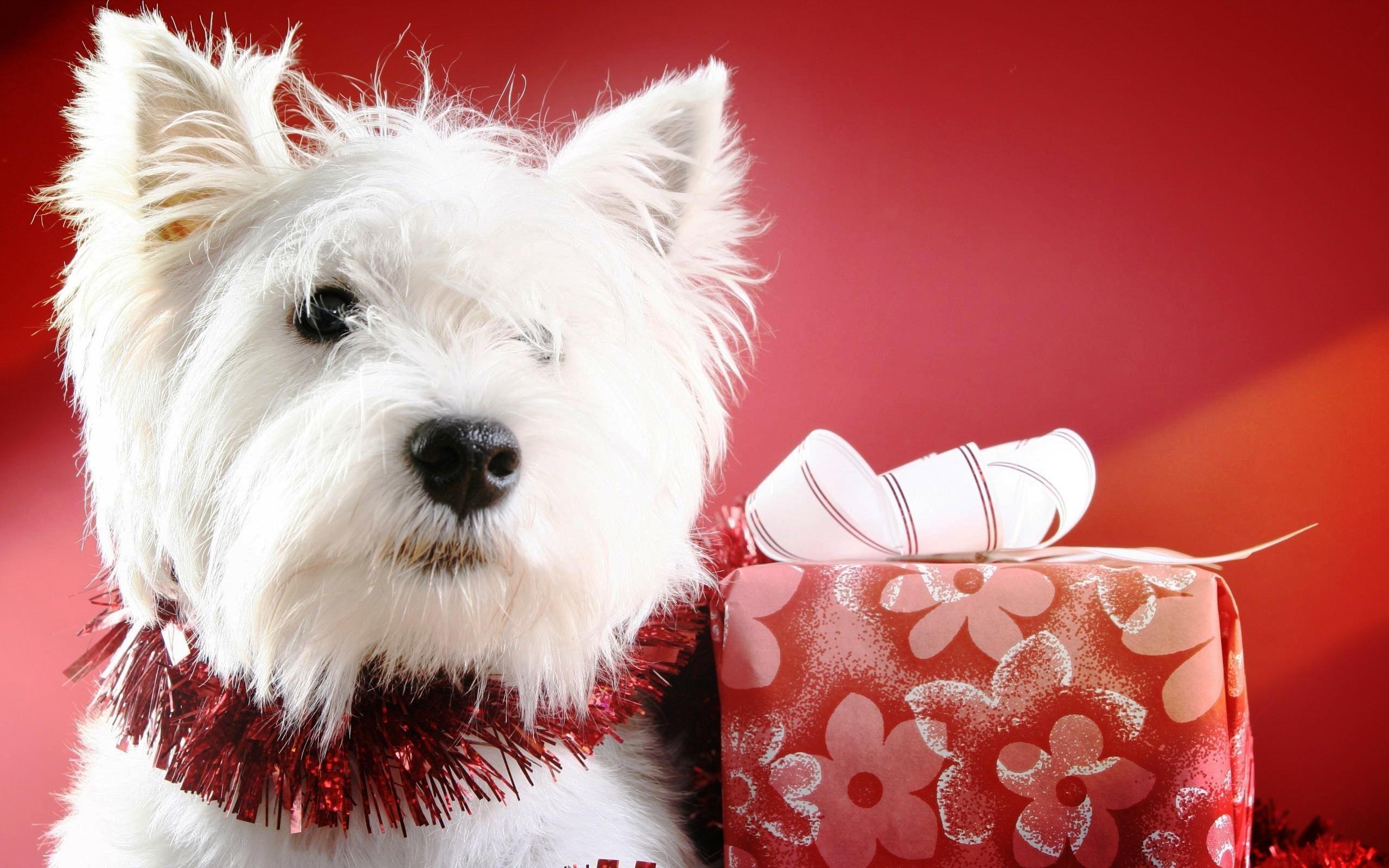 Fondos De Pantalla Navidenos: Fondos De Pantalla Navideños De Perritos Para Descargar