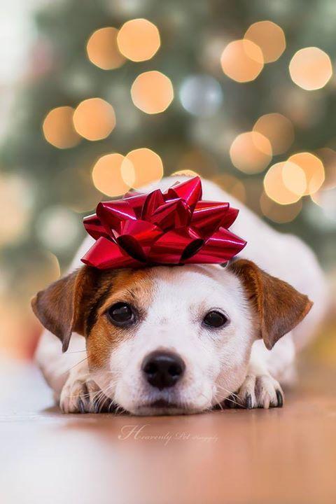 fondos-para-iphone-de-perros-navidenos