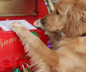 Hermosas Imagenes Navideñas Para Iphone Con Perros